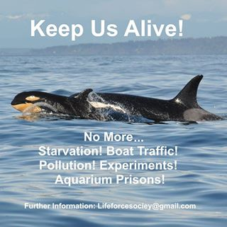 Time As Run Out To Save Orcas!